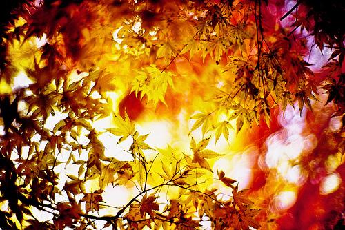 shimmer of the November sun