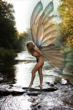 fairy muse1